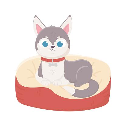 cute domestic little dog lying in cushion, pets