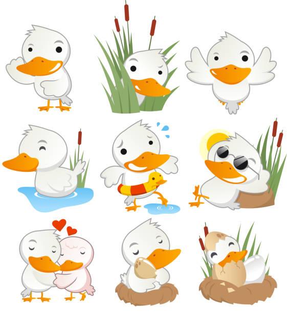 ilustrações de stock, clip art, desenhos animados e ícones de fofo pato em acção de recolha - bills couple
