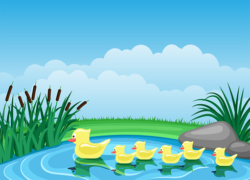 Cute ducks swimming on the pond.