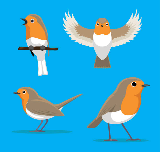 cute european robin cartoon vector illustration - bird watching stock illustrations, clip art, cartoons, & icons