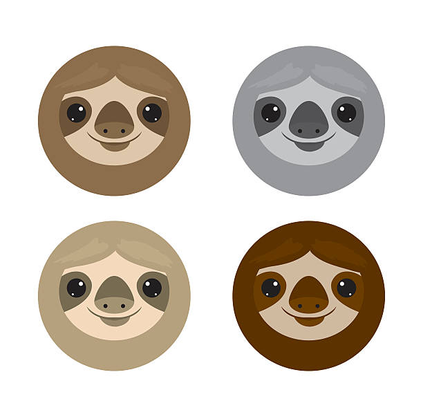 Cute face sloth, Animals. sloth on white background Vector Illustration - Illustration vectorielle