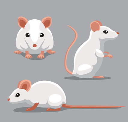 Cute Fancy Mouse Poses Cartoon Vector Illustration Stock Illustration - Download Image Now