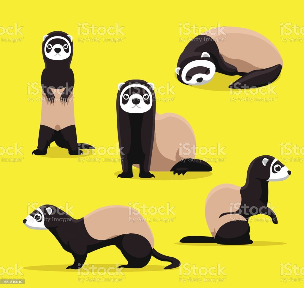 Cute Ferret Poses Cartoon Vector Illustration - Illustration vectorielle