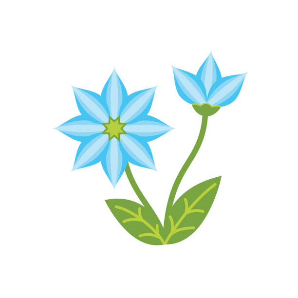 Cute Flower Icon In Flat Design - Blue Forget-Me-Not vector art illustration