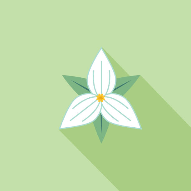 Cute Flower Icon In Flat Design - Trillium Simple flower icon in flat design style isolated on white. trillium stock illustrations