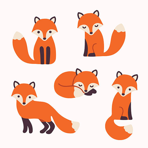 cute fox collection vector art illustration