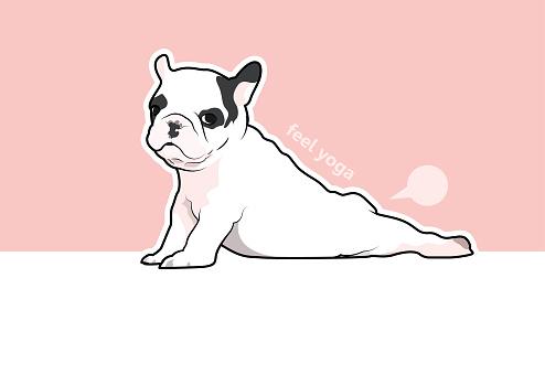 Cute French Bulldog in Yoga Style.