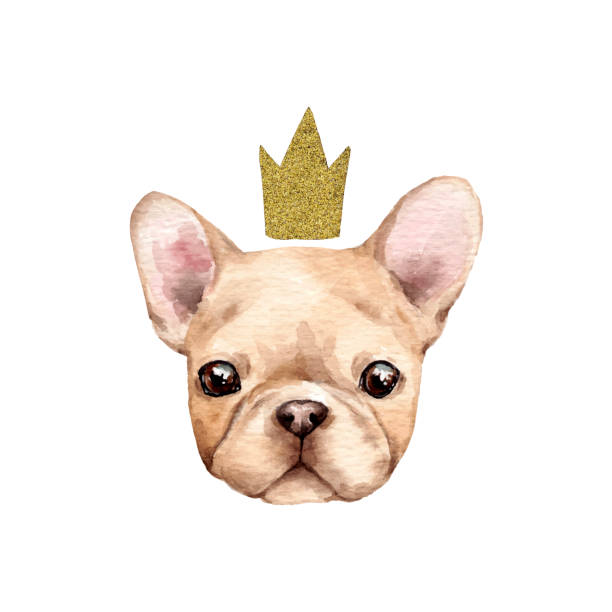 süße französische bulldogge - liebesbild stock-grafiken, -clipart, -cartoons und -symbole