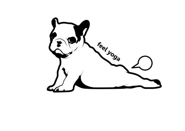 Cute Frenchie The Bulldog is Farting in Yoga Style. Cute Frenchie puppy is do yoga stretching and then she farts easily. street art stock illustrations
