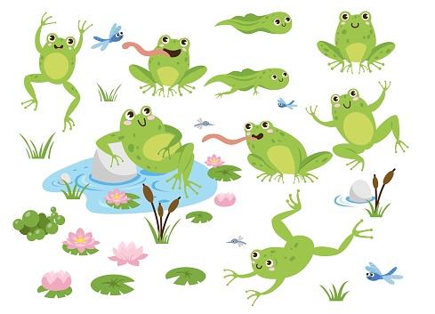Cute frog cartoon characters vector illustrations set