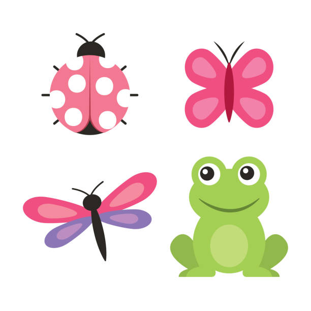 cute frog dragonfly butterfly ladybug vector art illustration