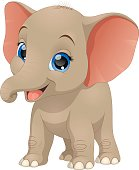 Cute funny baby elephant