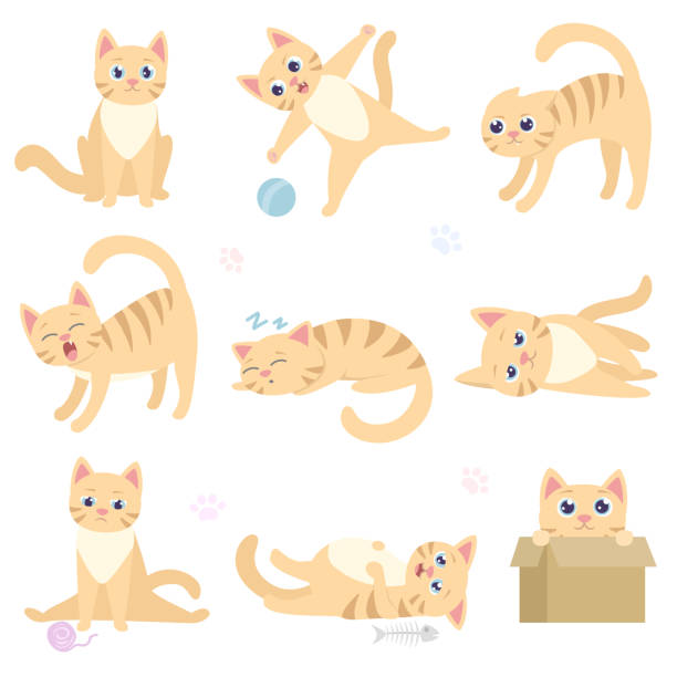 Cute funny cat in different situations. Playful domestic cat is sitting, playing with a ball, scares, sleeps, lies, sad, overeat, hiding in a box. Cute funny cat in different situations. Playful domestic cat is sitting, playing with a ball, scares, sleeps, lies, sad, overeat, hiding in a box. Collection of isolated illustrations scared cat stock illustrations