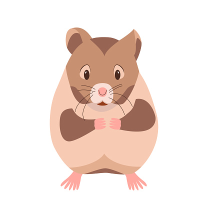 Cute funny hamster. Domestic pet guinea pig. Rodent cartoon character. Vector illustration isolated on white background. Small animal hamster. Clipart