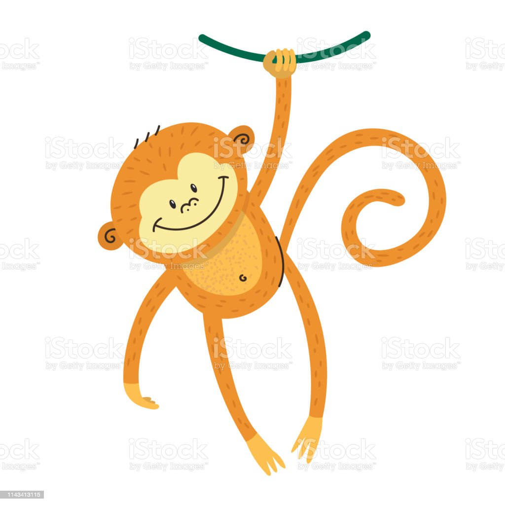 Cute Funny Marmoset Swinging On A Tree Kavay Little Monkey