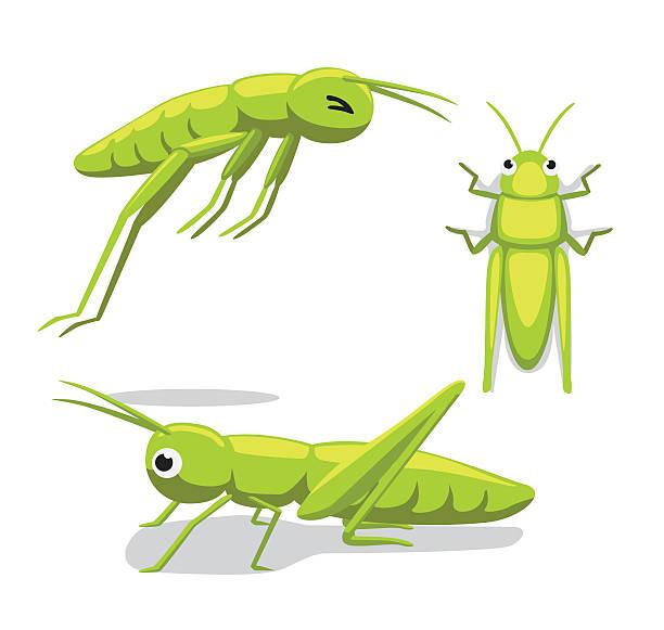 cute grasshopper poses cartoon vector illustration - cricket stock illustrations, clip art, cartoons, & icons