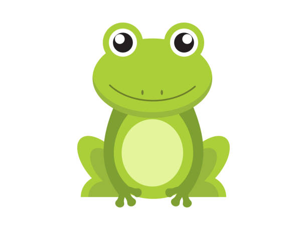 cute green frog cartoon character isolated on white background - amphibians stock illustrations