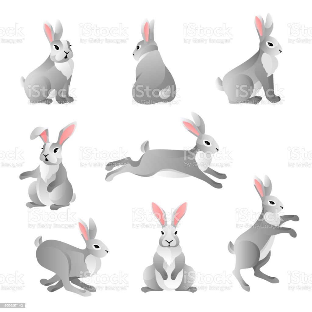 Cute grey rabbits set vector art illustration