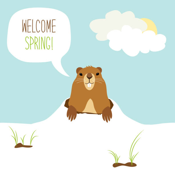 cute groundhog day card as funny cartoon character of marmot - hibernation stock illustrations