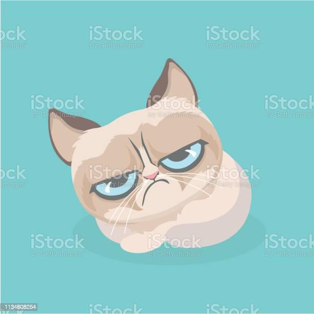 Cute grumpy cat vector illustration vector id1134608254?b=1&k=6&m=1134608254&s=612x612&h=hllrtwcype43gvlwvpg4nqajlyj1jqqa4kln4odgkqu=