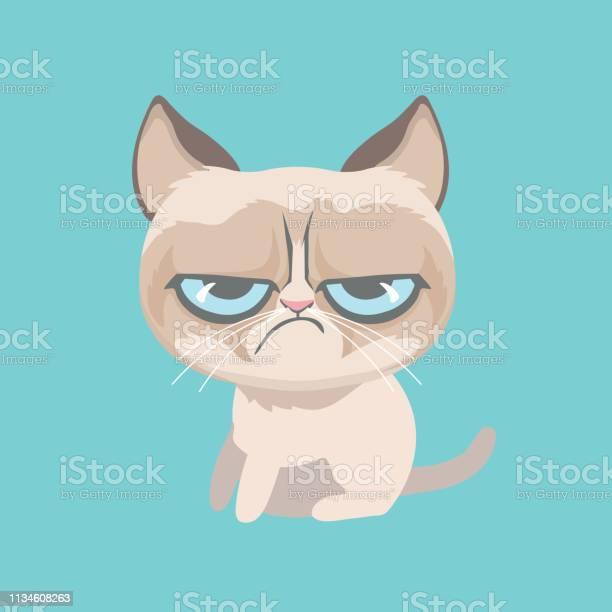 Cute grumpy cat vector illustration vector id1134608263?b=1&k=6&m=1134608263&s=612x612&h=nvxbeiyvrfxgnmtgbk2xtp5igzxcluaritgtghzkffs=