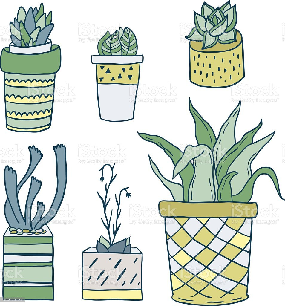 house plants drawing. cute hand drawn houseplants and succulents in pots vector set royaltyfree stock house plants drawing y