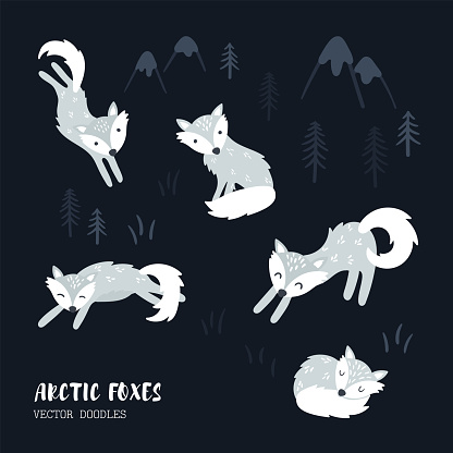 Cute hand drawn polar foxes vector collection