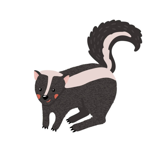 Cute hand drawn skunk isolated on white. Cute hand drawn standing skunk isolated on white background. Forest animal. Vector illustration. skunk stock illustrations