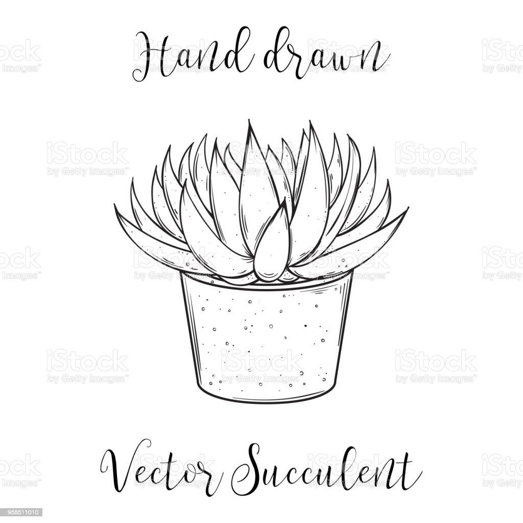 Cute Hand Drawn Succulent Astroloba Tenax In A Concrete Flower Pot