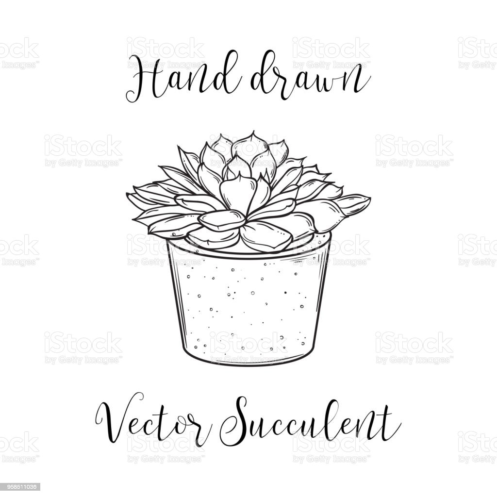 Cute Hand Drawn Succulent In A Concrete Flower Pot Vector Black And