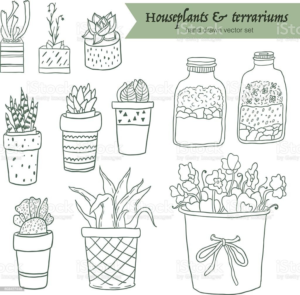 house plants drawing. cute hand drawn terrariums houseplants and succulents in pots royaltyfree stock vector house plants drawing v