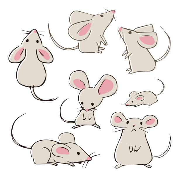Cute hand-drawn mouses with different poses Cute hand-drawn mouses with different poses on white background mouse stock illustrations