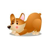 istock Cute happy corgi dog make morning exercise 1207731231