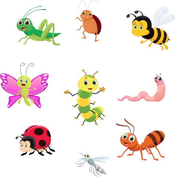 cute insect collection set vector illustration of cute insect collection set butterfly insect stock illustrations