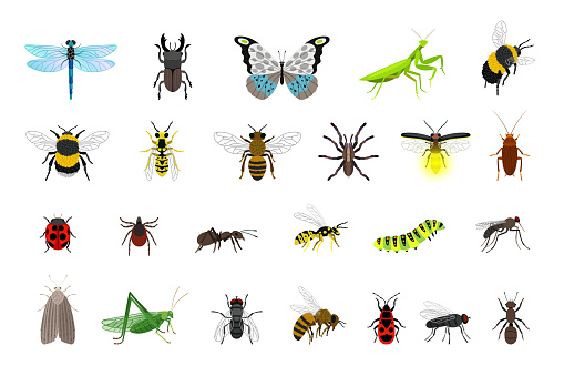 Cute insects collection. Cartoon small colorful beetles and caterpillars, bugs and butterfly