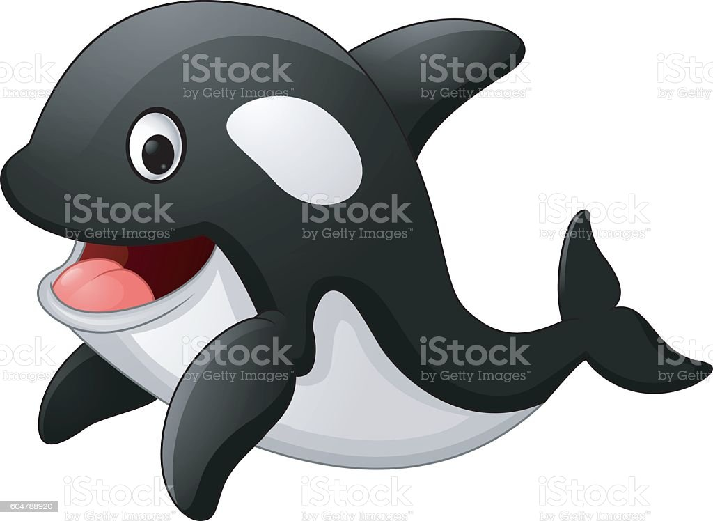 royalty free killer whale clip art vector images illustrations rh istockphoto com png clipart of a killer whale png clipart of a killer whale