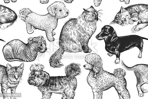 Seamless pattern cute kittens and puppies. Home pets isolated on white background. Sketch. Vector illustration art. Realistic portraits of animal. Vintage. Black and white hand drawing of cat and dog