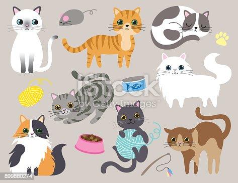 istock Cute Kitty Cat Vector Illustration 899880274