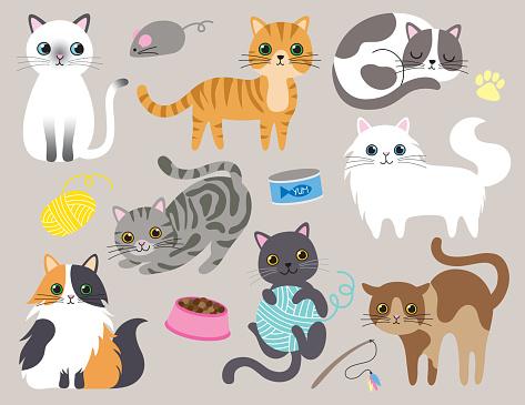 Cute Kitty Cat Vector Illustration