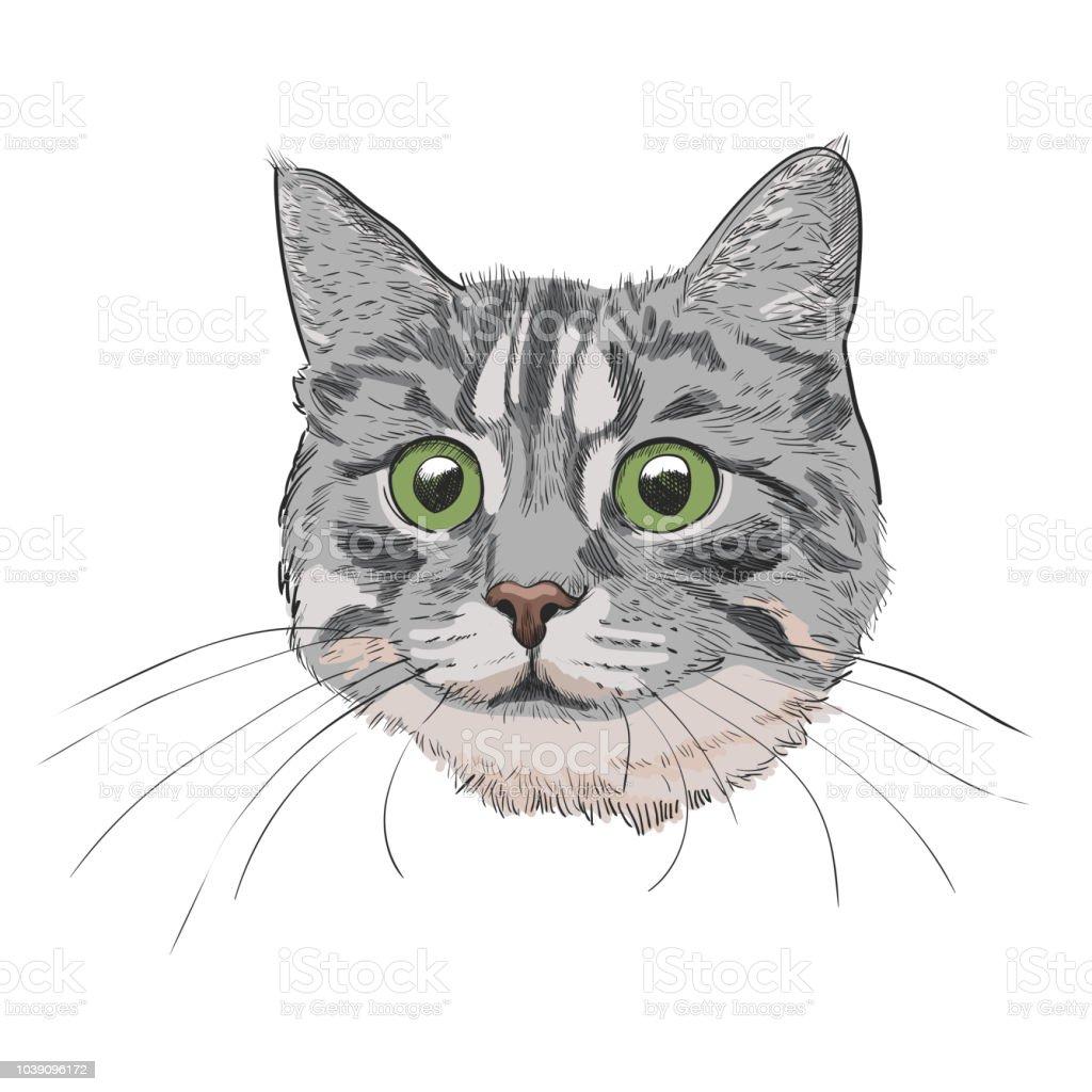 Cute kitty head hand drawn illustration. vector art illustration