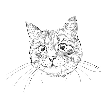 Cute kitty head hand drawn sketch.