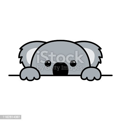 Cute koala paws up over wall, koala peeking cartoon icon, vector illustration
