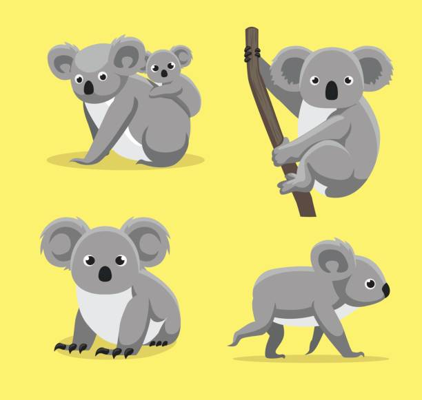 cute koala poses cartoon vector illustration - koala stock illustrations