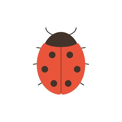 Cute ladybug in flat style isolated on white background.