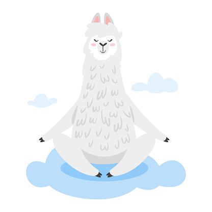 Cute lama. Alpaca animal