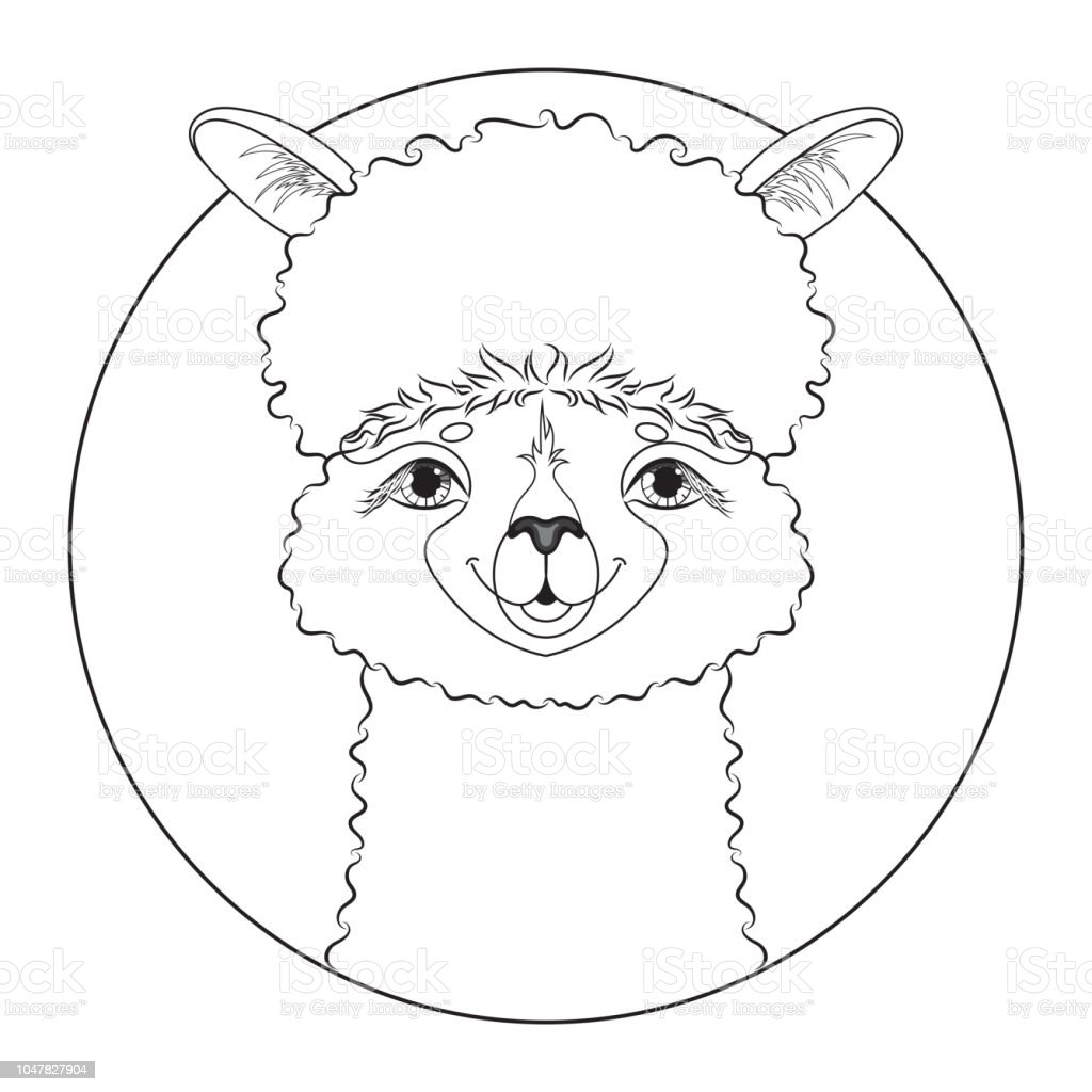 alpaca malvorlage  coloring and malvorlagan