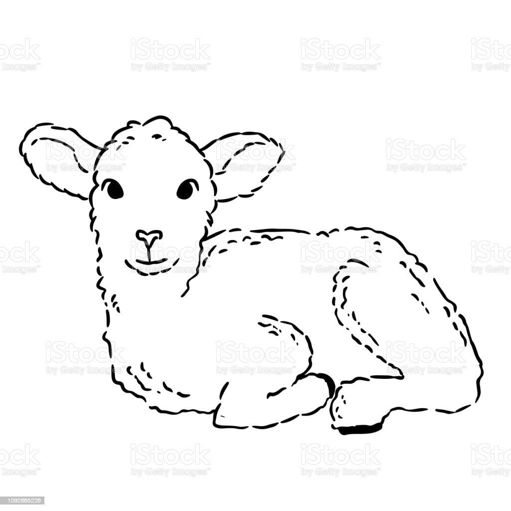 Sevimli Kuzu Doodle Kroki Elle Cizilmis Resim Kucuk Bir Koyun Stok