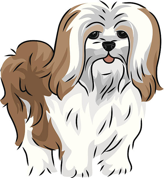 Top 60 Lhasa Apso Clip Art, Vector Graphics and ...