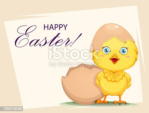 istock Cute little chick hatched from an egg 1305076293