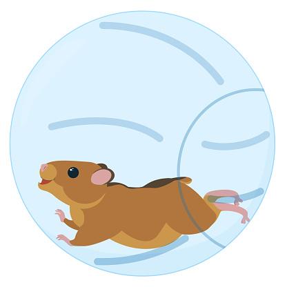 Cute little hamster running in blue ball